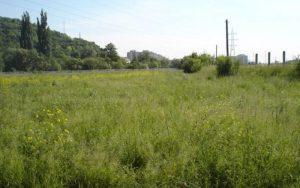 Proprietarii de terenuri îmburuienite vor fi amendați