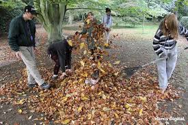 Nu arde frunzele! Vezi cum le poți transforma în îngrășământ natural