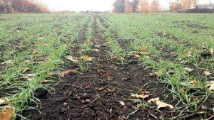Condiții mai puțin favorabile pentru dezvoltarea culturilor de toamnă
