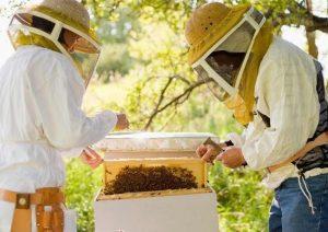 Anunţ- Seminar pentru apicultori