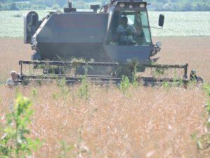 În raionul Șoldănești a fost dat start secerișului