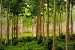 Sincere felicitări tuturor silvicultorilor din raionul Șoldănești cu ocazia sărbătorii profesionale